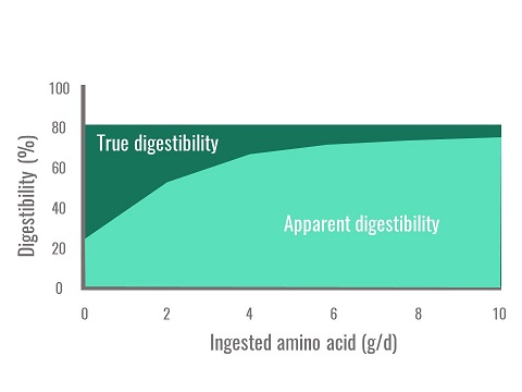 Effect of the quantity of ingested amino acid on apparent digestibility