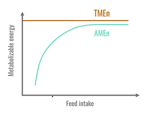 Relationship between AMEn, TMEn and feed intake